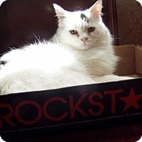 Adopt A Pet :: Rockstar - Hopkinsville, KY