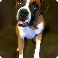 Adopt A Pet :: Reizo - Hurst, TX