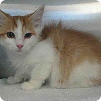 Adopt A Pet :: *BOBO - Norco, CA