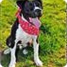 Adopt A Pet :: Dee/Diesel