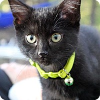 Adopt A Pet :: Soot - Fort Leavenworth, KS