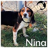 Adopt A Pet :: Nina - Chicago, IL