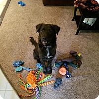 Adopt A Pet :: MICKEY - Phoenix, AZ