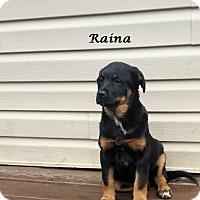 Adopt A Pet :: Raina - Bartonsville, PA