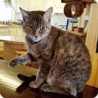 Adopt A Pet :: Symphomie - Orange, CA