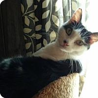Adopt A Pet :: Catalina - McEwen, TN