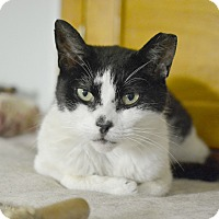 Adopt A Pet :: Polly - Queens, NY
