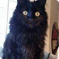 Adopt A Pet :: Minuette - Salt Lake City, UT