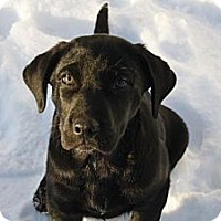 Adopt A Pet :: Finch - Saskatoon, SK