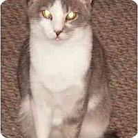 Adopt A Pet :: Renee - Milford, OH