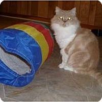 Adopt A Pet :: Teddy - Warminster, PA