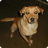 Adopt A Pet :: Barnaby - Kendall, NY