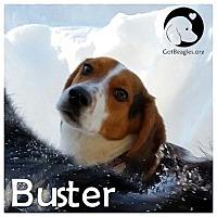 Adopt A Pet :: Buster - Novi, MI