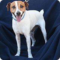 Adopt A Pet :: Jackie - Umatilla, FL