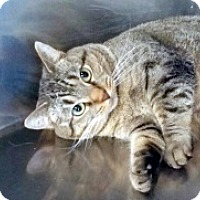 Adopt A Pet :: Samantha - Germantown, MD
