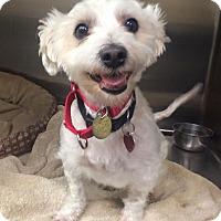 Adopt A Pet :: Koda - Oak Ridge, NJ