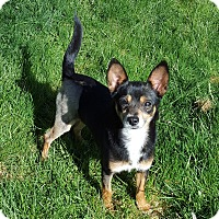 Adopt A Pet :: Chrissy - Sweet & Quiet - Bend, OR