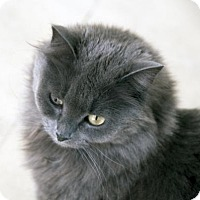 Adopt A Pet :: Mewsette - Alameda, CA