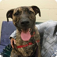 Adopt A Pet :: Lola [Foster Me?] *Free Training* - Decatur, GA