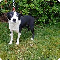 Adopt A Pet :: ROCCO - McKinleyville, CA