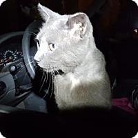 Adopt A Pet :: Liam - Orlando, FL
