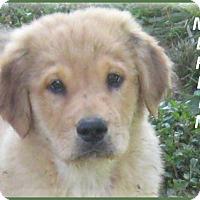 Adopt A Pet :: Merlin - Marlborough, MA