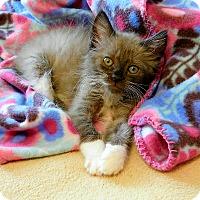 Adopt A Pet :: Nugget - Davis, CA