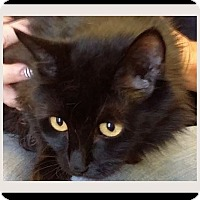 Adopt A Pet :: WOOGIE:Low fees, Neutered - Red Bluff, CA