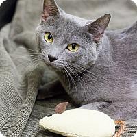 Adopt A Pet :: Mikhail - Chicago, IL