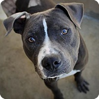 Adopt A Pet :: TENNESSEE - Red Bluff, CA