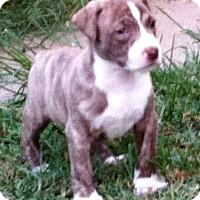 Adopt A Pet :: Skylar - Waller, TX
