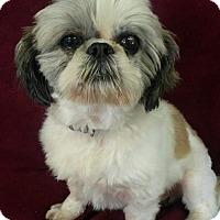 Adopt A Pet :: Rudy Putnam - Urbana, OH