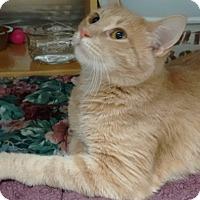 Adopt A Pet :: Tenacious - Morganton, NC