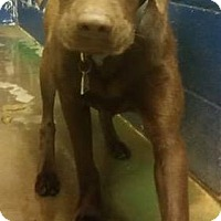 Adopt A Pet :: Jewel - Enfield, CT