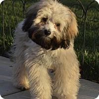 Adopt A Pet :: Wheaties - Palo Alto, CA