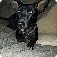 Adopt A Pet :: Poco meet me 10/28 - Manchester, CT