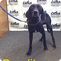 Hound (Unknown Type) Dog for adoption in Waycross, Georgia - Bandit