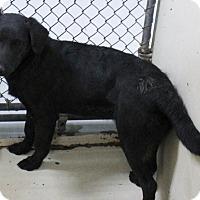 Adopt A Pet :: A05 Aubree - Odessa, TX