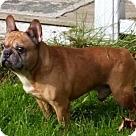 Adopt A Pet :: Roonie