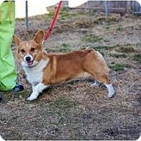 Adopt A Pet :: Sam - Inola, OK