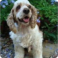 Adopt A Pet :: Zack - Sugarland, TX