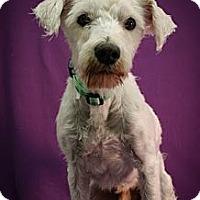 Adopt A Pet :: Lars - Broomfield, CO