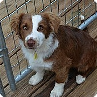Adopt A Pet :: Donnie - Garland, TX