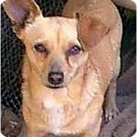 Adopt A Pet :: BORIS - dewey, AZ