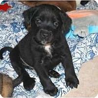 Adopt A Pet :: Bridget - Minneola, FL