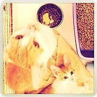 Adopt A Pet :: Vasya - Brooklyn, NY