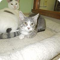 Adopt A Pet :: Finnick - Medina, OH