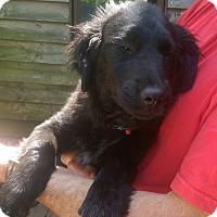 Adopt A Pet :: Willow - Charlestown, RI