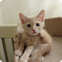 Adopt A Pet :: Bailey - Colmar, PA
