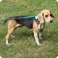 Adopt A Pet :: Maestro - Dumfries, VA